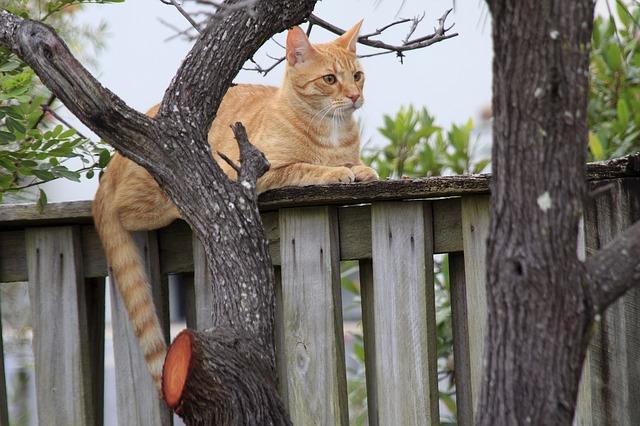venkovní kočka