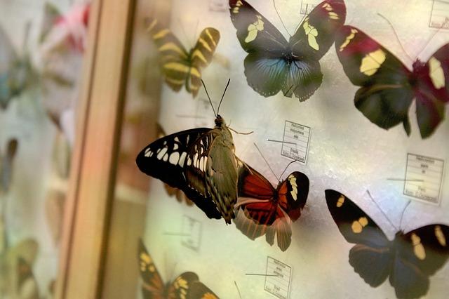 sbírka motylů