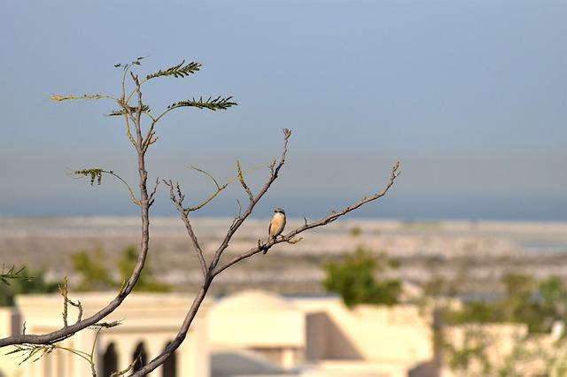 Pták na větvi